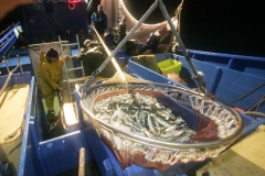 Pesca.Irun-57.jpg